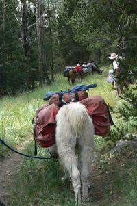 Llama trek 078