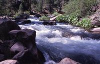 McCloud River - water's edge 7-75 Kushlis
