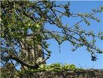 Photo 15 cathedral tower through tree branches Somerset Trip summer 2011