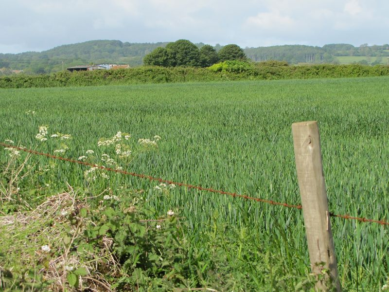 Photo 1 Farmscape. Somerset summer 2011