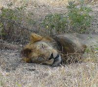Africa Safari (Nick's Pics) 369