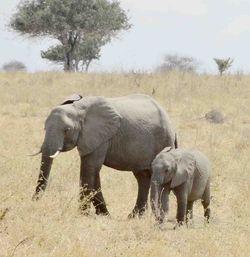 Africa Safari (Nick's Pic's) 327
