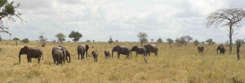 Africa Safari (Nick's Pic's) 324