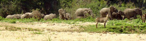 Elephant file