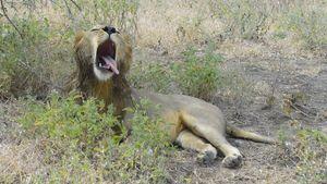 Africa Safari (Nick's Pics) 379