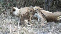 Africa Safari (Nick's Pics) 479