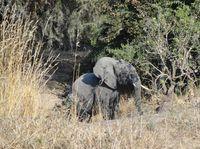 Africa Safari (Nick's Pic's) 452