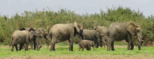 Africa Safari (Nick's Pics) 209