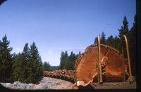 McCloud River Railroad logging train JEH img015