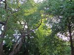 Photo 41 Whispering trees summer 2011