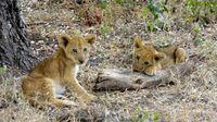 Africa Safari (Nick's Pics) 291