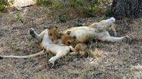 Africa Safari (Nick's Pics) 314