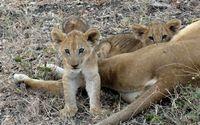 Africa Safari (Nick's Pics) 312