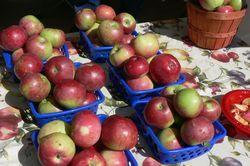 Copy of Farmers Market 025