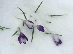 Spring 2012 017