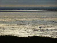 Gull over the sea  536211_10153497958585099_27131890_n