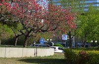 Park and peach