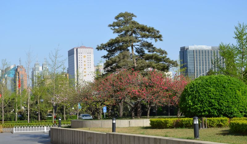 Park and walksDSC_0067