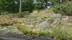 Lichen_on_granite_ii