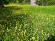 Wildflower_field_valplane_71608